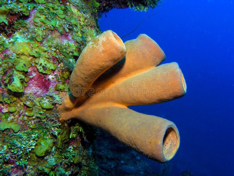 橙色海绵 图库摄影