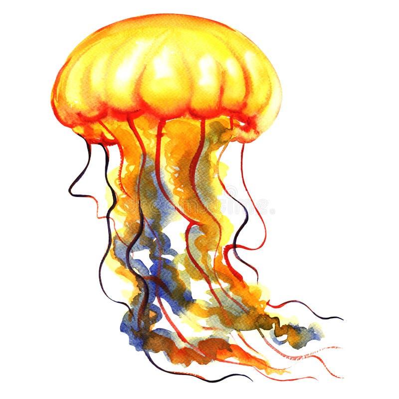 橙色海洋水水母,水母,被隔绝,海洋生活,水彩例证 库存例证