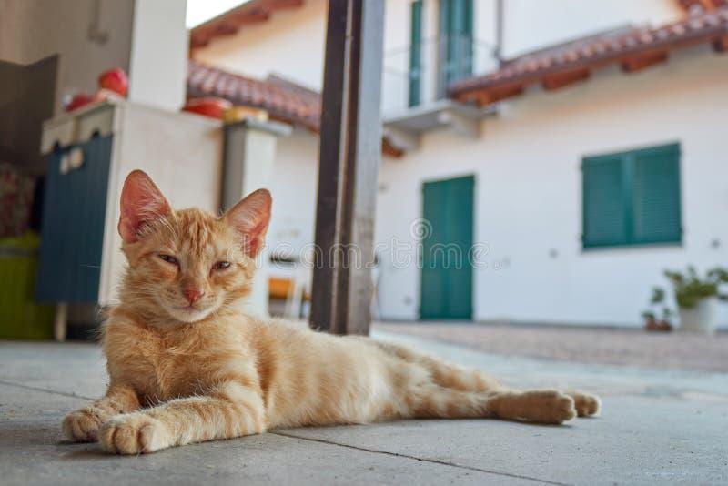 橙色猫休息 免版税图库摄影