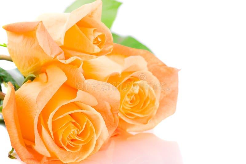 橙色玫瑰三 库存图片