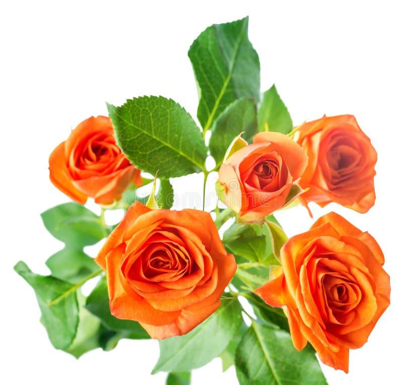 橙色玫瑰丛花被隔绝在白色, 免版税库存图片