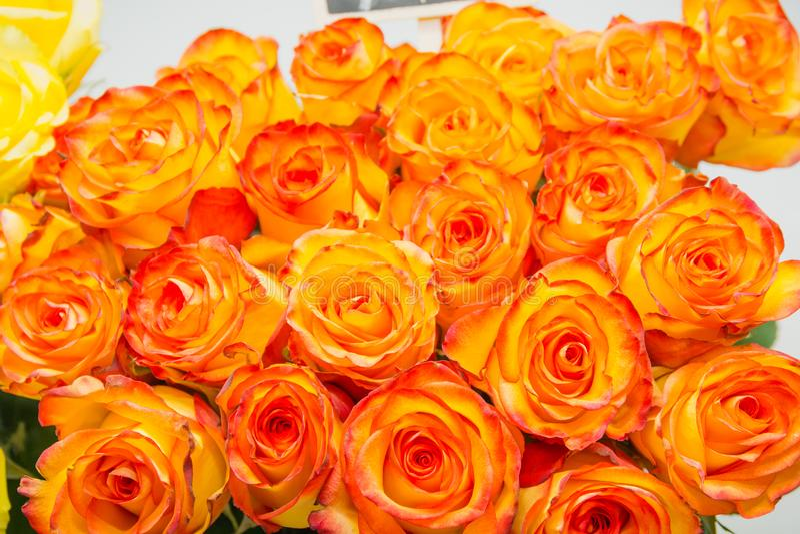 橙色玫瑰 它是很多橙色玫瑰 免版税库存图片