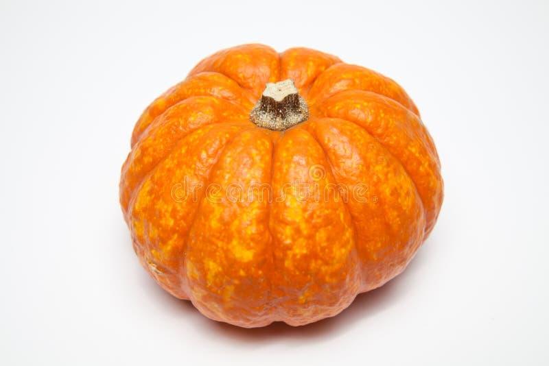 橙色瓢 免版税库存图片