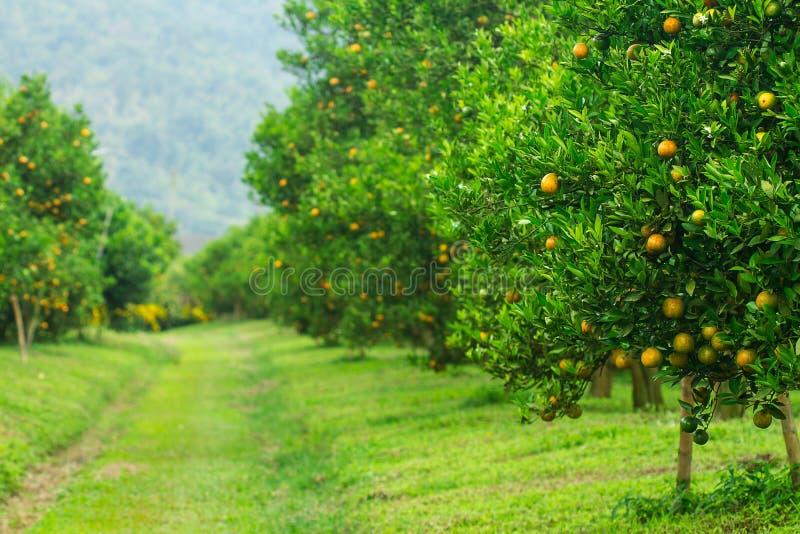 橙色的树丛 库存照片