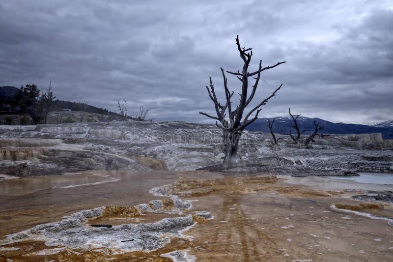 橙色矿床和贫瘠树 免版税库存图片