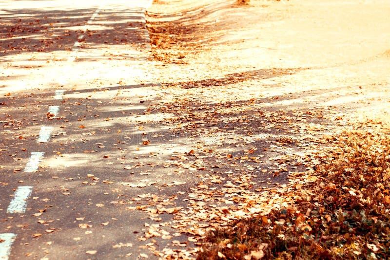 橙色秋叶在阳光下在沥青 免版税库存图片