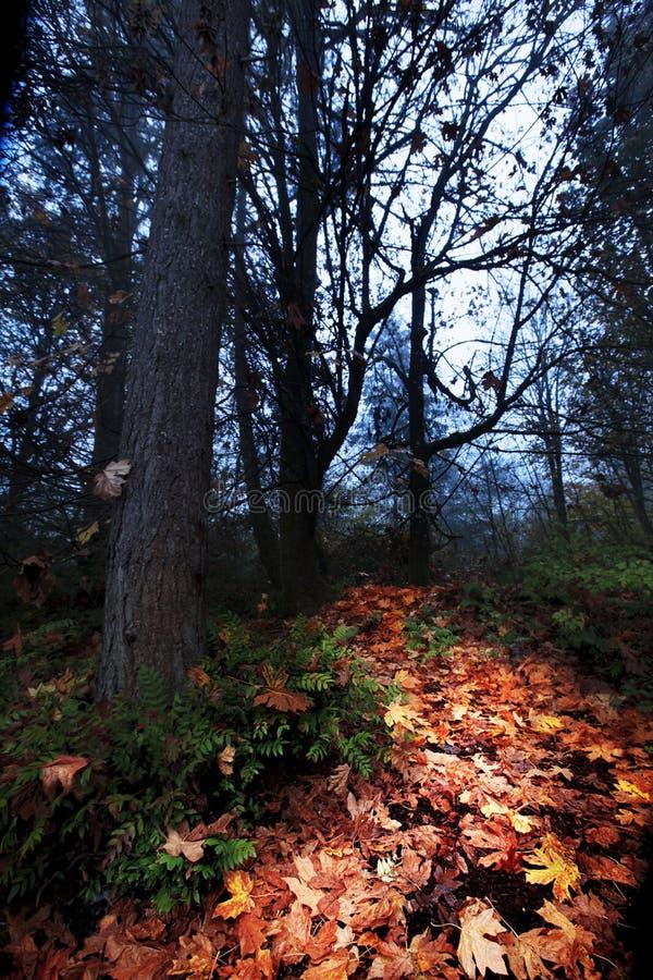 橙色秋天叶子路通过黑暗的森林 免版税库存图片