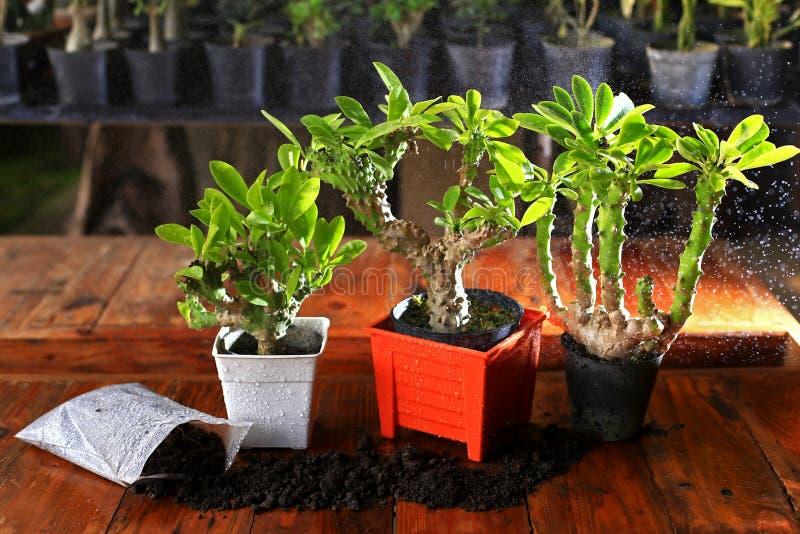 橙色罐和土壤的植物 免版税库存图片