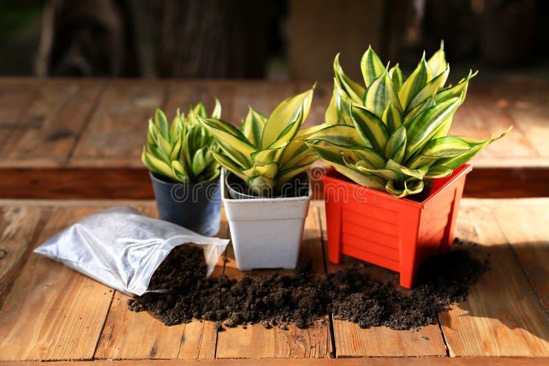 橙色罐和土壤的植物 图库摄影