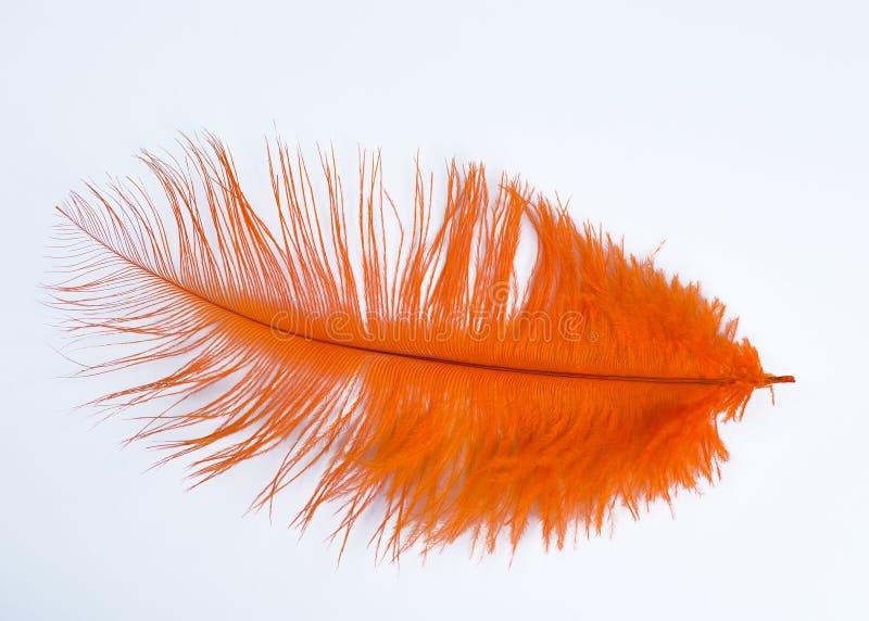 橙色羽毛 库存照片