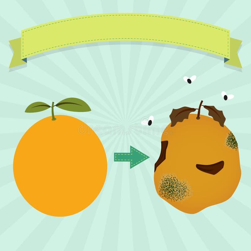 橙色腐烂 皇族释放例证