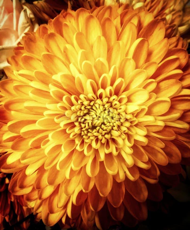 橙色花在夏天 免版税图库摄影