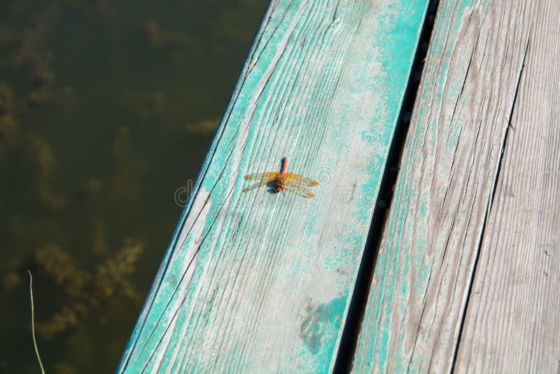 橙色蜻蜓坐一个木板条 库存照片