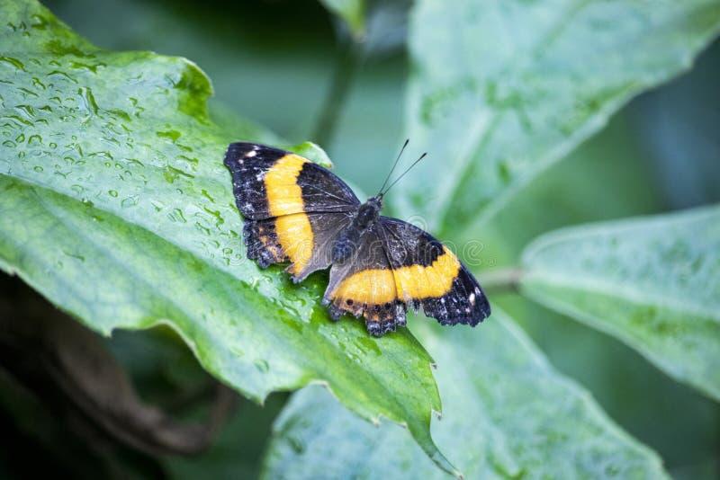 橙色蝴蝶坐叶子 免版税库存照片