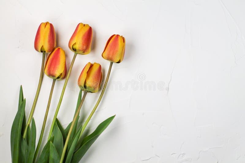 橙色郁金香花束在白色背景的 免版税库存照片