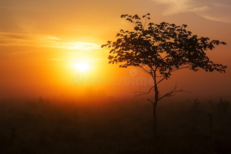 橙色雾 库存照片