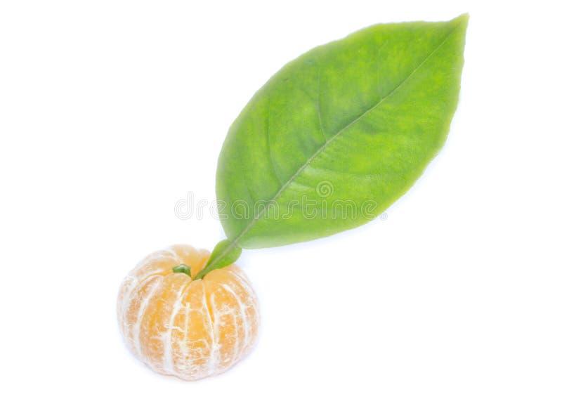 橙色非洲 免版税库存照片