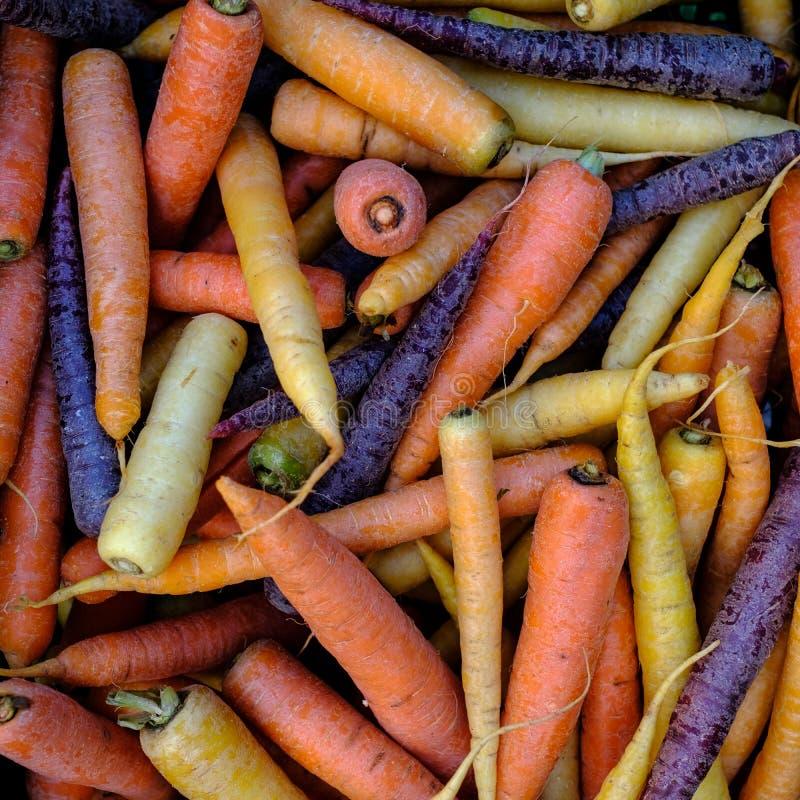 橙色,黄色和紫色红萝卜 免版税库存图片