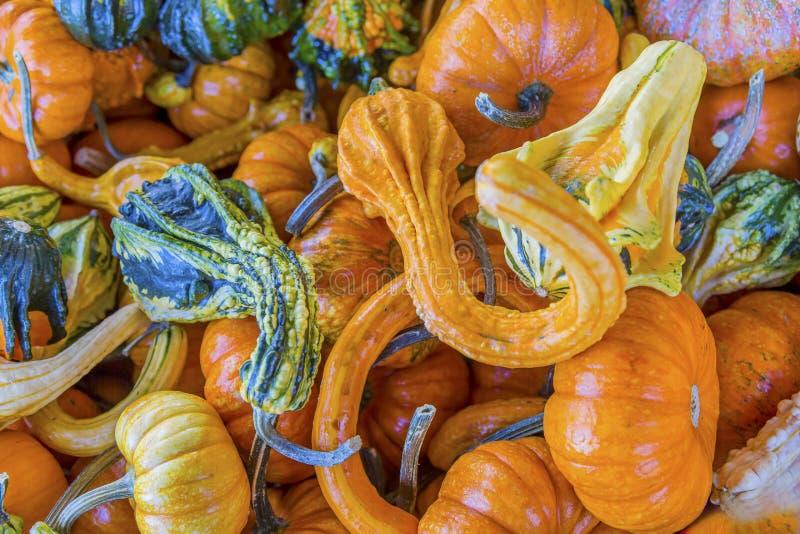 橙色绿色黄色金瓜瓢南瓜华盛顿 免版税库存照片