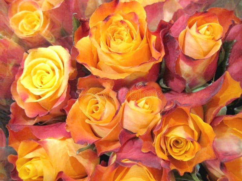 橙黄色罗斯花束 免版税库存照片