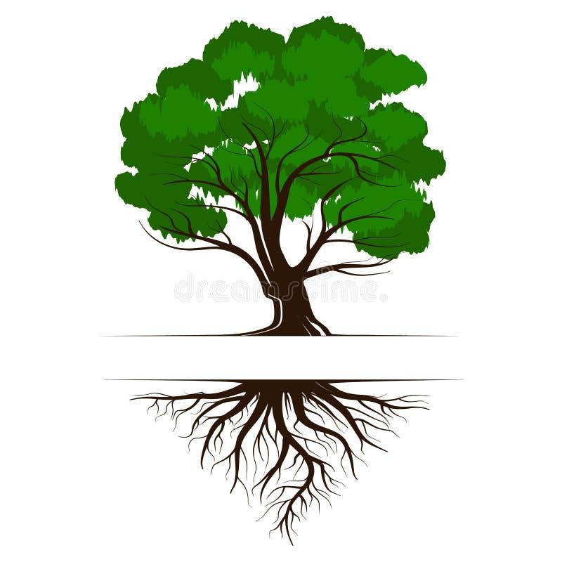 橡木与根和叶子的一棵绿色生活树 传染媒介在白色背景隔绝的例证象 向量例证