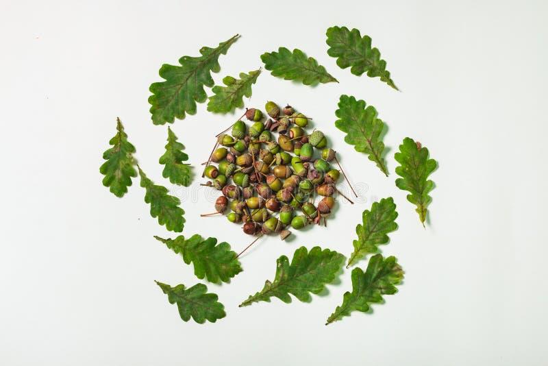 橡木叶子和橡子形式圈子 免版税库存照片