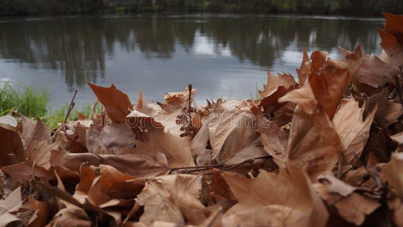 橡木叶子废弃物河沿在新西兰 图库摄影