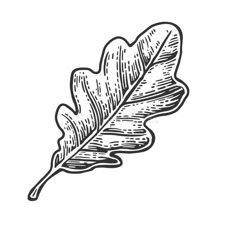 橡木叶子 传染媒介葡萄酒被刻记的例证 库存例证