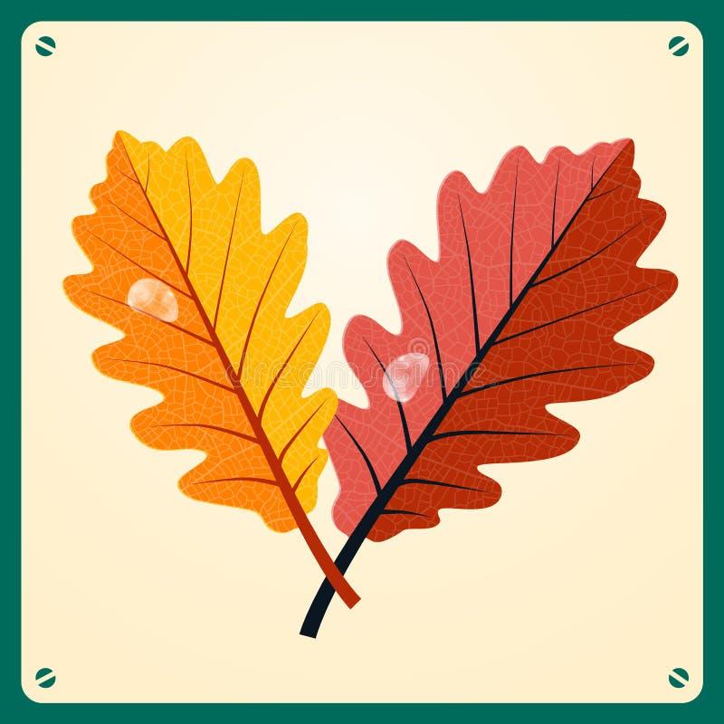 橡木叶子-有雨下落的橡木叶子 皇族释放例证