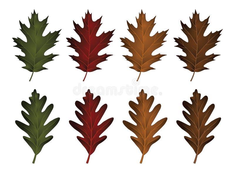 橡木叶子-黑橡树和白栎木 皇族释放例证