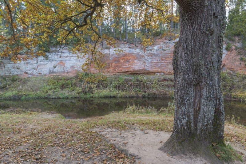 橡木和砂岩峭壁 库存图片
