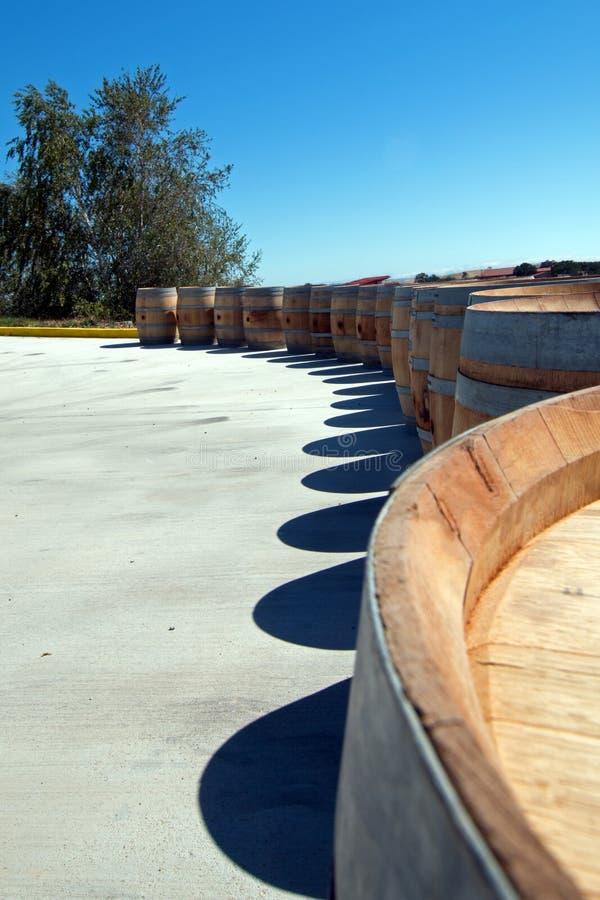 橡木在树旁边排队的葡萄酒桶 免版税库存照片