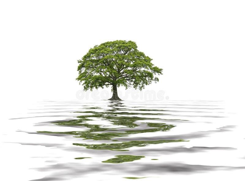 橡木夏天结构树 向量例证