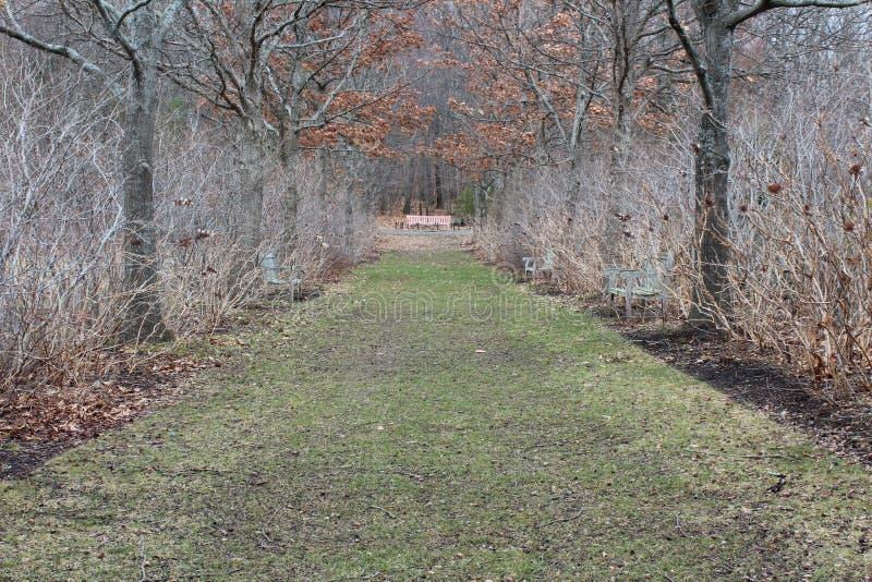 橡木大道在冬天道路正式背景中 免版税库存照片