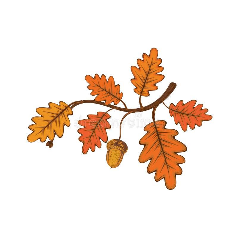 橡木有叶子和橡子的` s枝杈 向量例证
