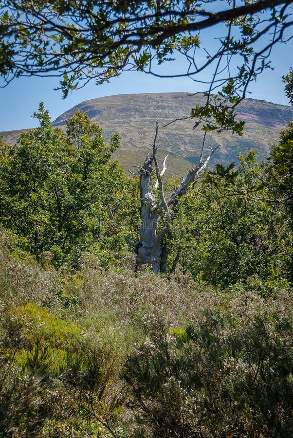 橡木森林在丰特斯Carrionas国立公园  帕伦西亚 图库摄影