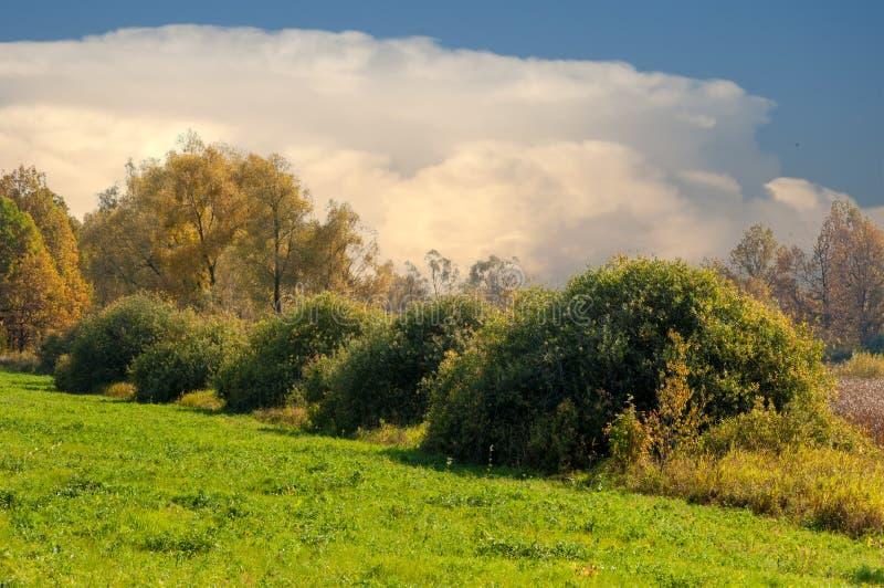 橡木湖秋天混杂的森林  库存照片