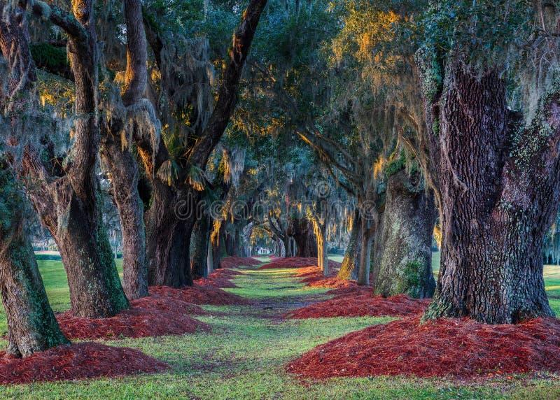橡木的大道 免版税库存照片