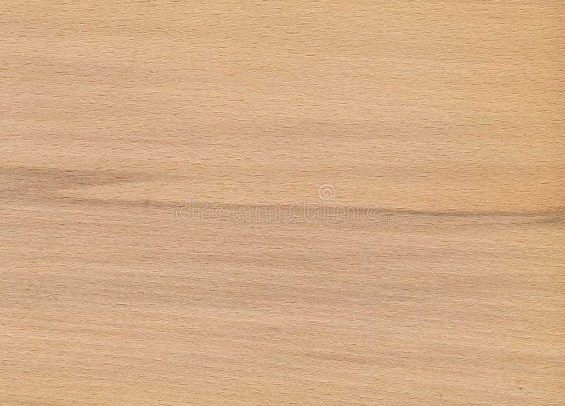 橡木纹理木头 图库摄影