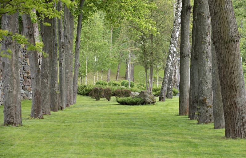 橡木胡同在有美丽的绿色草坪草坪的公园-优秀自然眺望台 免版税库存照片