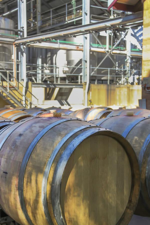 橡木葡萄酒桶在葡萄园里 免版税库存照片