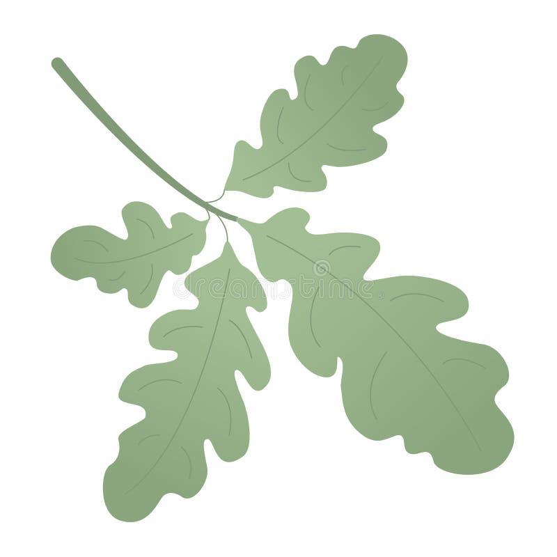 橡木装饰和详细或者装饰的绿色叶子 夏天美丽的单叶 向量例证