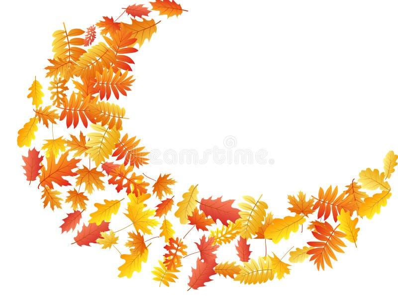 橡木,槭树,狂放的灰花揪离开传染媒介,在白色背景的秋天叶子 皇族释放例证