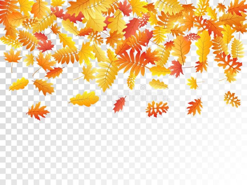 橡木,槭树,狂放的灰花揪离开传染媒介,在透明背景的秋天叶子 皇族释放例证