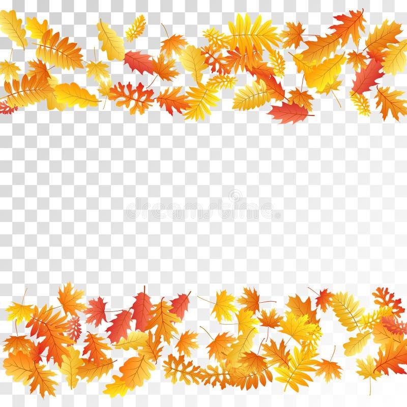 橡木,槭树,狂放的灰花揪离开传染媒介,在透明背景的秋天叶子 向量例证