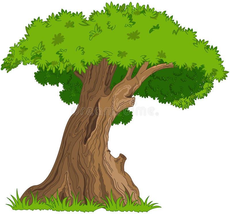 橡木 向量例证