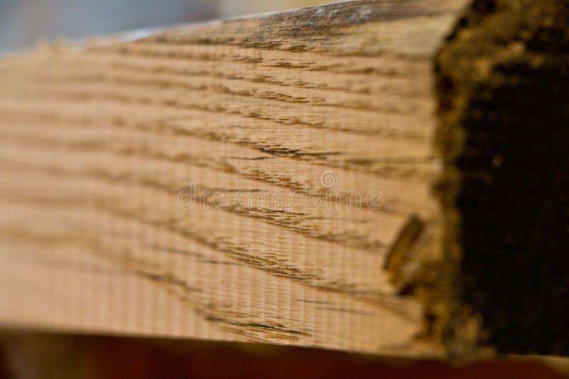 橡木 免版税库存照片