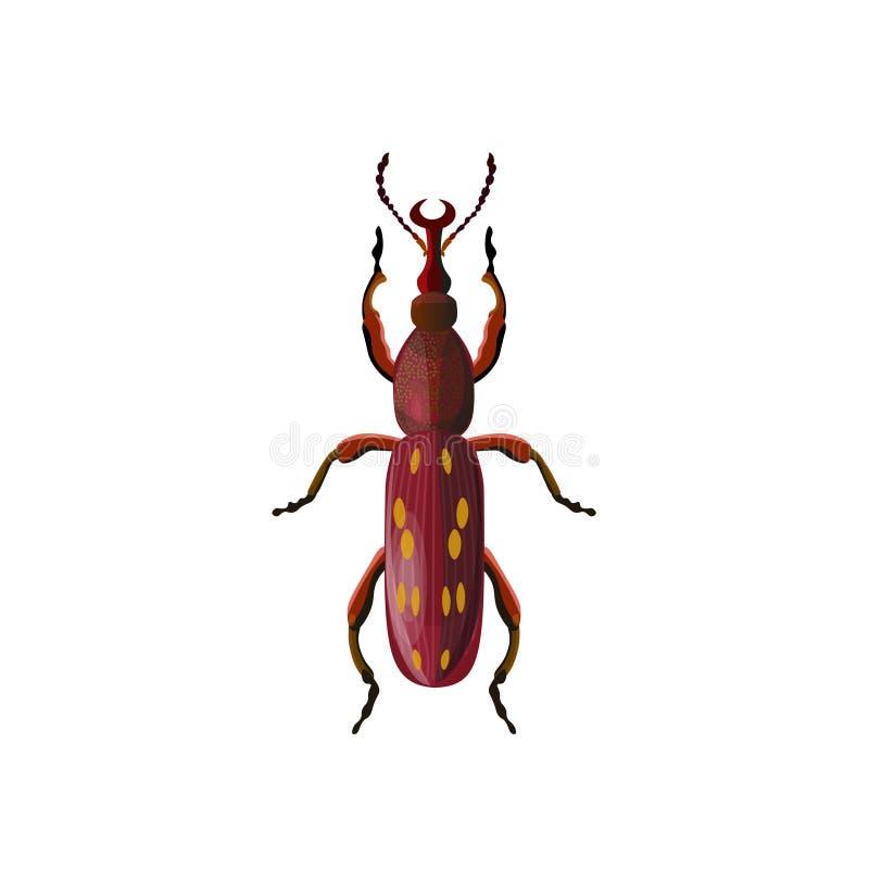 橡木timberworm甲虫 皇族释放例证