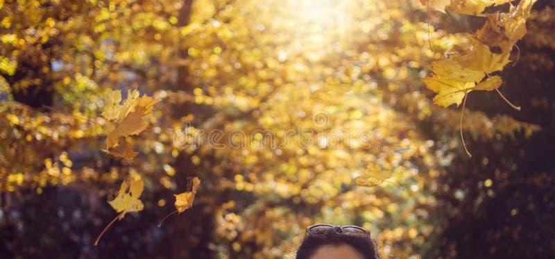 橡树下落的叶子在秋天晒干森林下落在妇女头 免版税库存照片