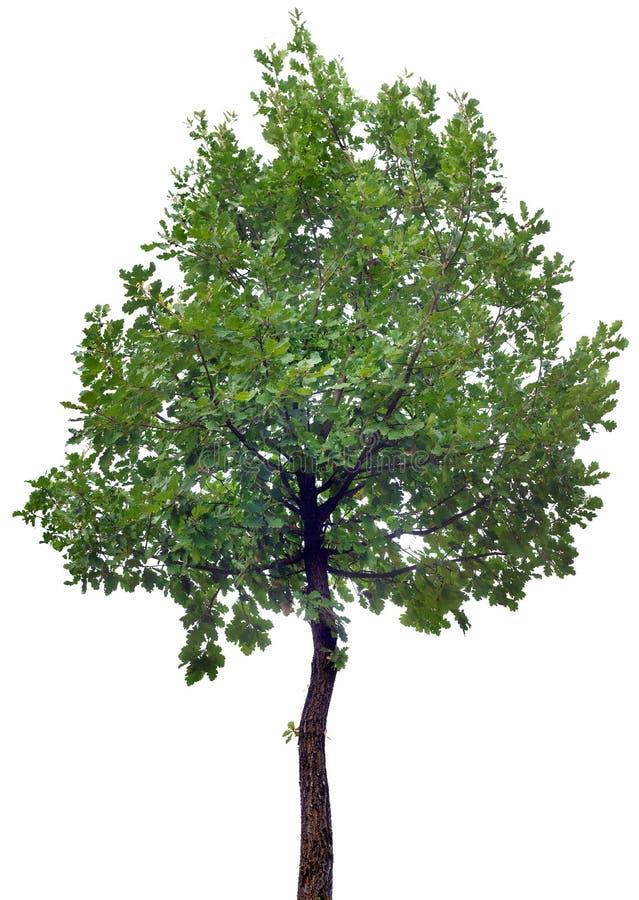 橡树保险开关 免版税库存图片